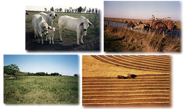 Photos of our ranches and farms